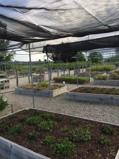 Raised beds at Waterman Nursery