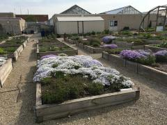 Container and raised bed area @ OPGC